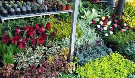 mencari toko tanaman hias harga murah tukang taman