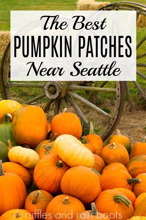 pumpkin seattle patches near washington patch farm bad pumpkins text carving going princess adding fall