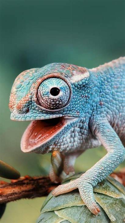 Chameleon Cute Htc Wallpapers Easy