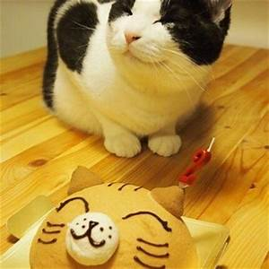 Cat Is Ecstatic About Its Happy Birthday Cake