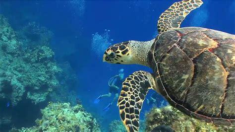 Sea Turtles Fun Facts Amazing Video - YouTube