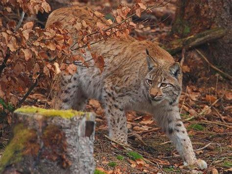 wildkatzenland oekoleo umwelt und naturschutz fuer kinder