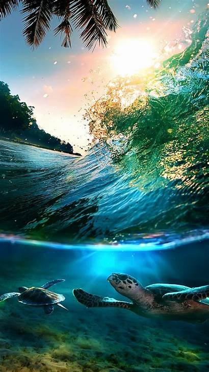 Iphone Tropical Sea Plus Turtles Island Wallpapers
