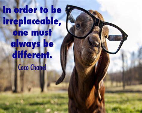 goat quotes image quotes  hippoquotescom