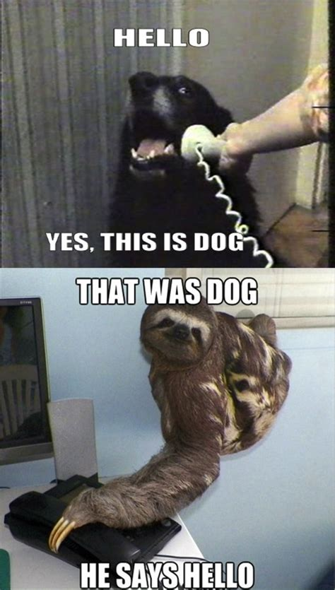 Yes This Is Dog Meme - 8 best hello yes this is dog images on pinterest funniest pictures animal memes and fun things