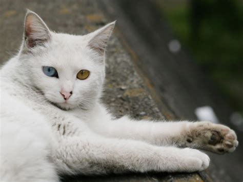 galeria de imagenes fondos de pantalla de gatos