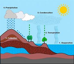 Water Cycle Diagram Australia Image Collections How To