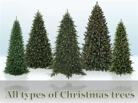 all types of christmas trees
