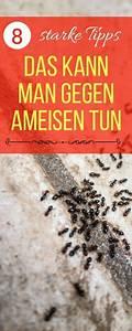 Mittel Gegen Stinkwanzen : ameisen im haus bek mpfen so geht es richtig tipps ameisen im haus ameisen im haus ~ Orissabook.com Haus und Dekorationen