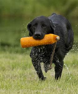 3 Ways To Help Your Gundog Want To Retrieve But Should