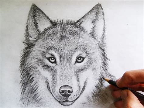 wolf drawings google search wolf art wolf face
