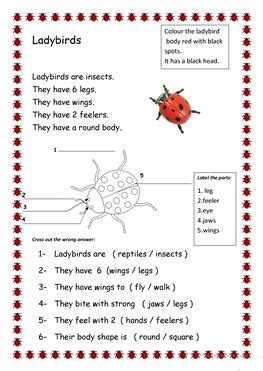 english esl insects worksheets  downloaded  results