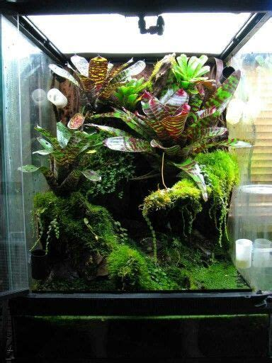 image result  creating  planted vivarium  crested
