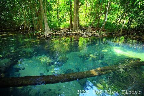 science: ระบบนิเวศป่าดิบชื้น