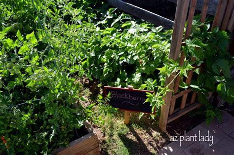 Arcadia Edible Garden Tour Part Ramblings From