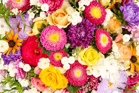 Flower Background Colorful Flowers Wallpaper And Background Image
