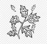 Twig Tree Coloring Branch Clip sketch template