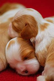 Adorable Baby Puppies