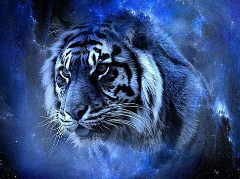Free Tiger Wallpapers Wallpaper Cave
