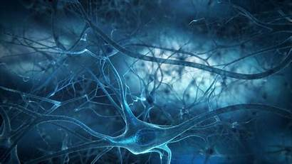 Brain Cell Taxonomy Neural Constructing Mapping Journal