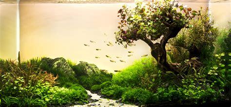 des paysages d aquariums