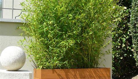 bac a bambou exterieur exemples de r 233 alisations en bambous pour ext 233 rieur