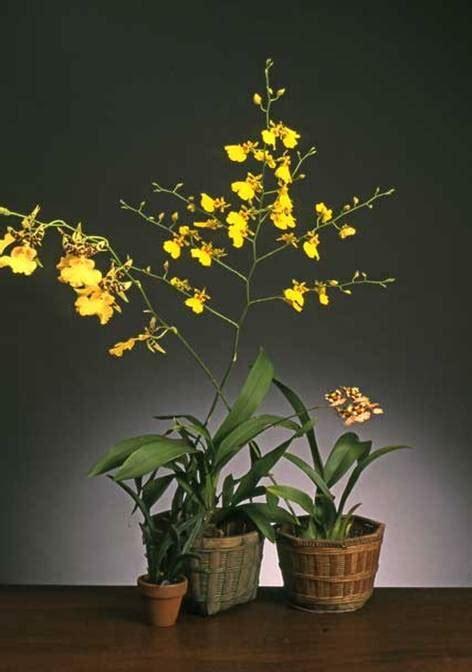 orchids   south florida garden show
