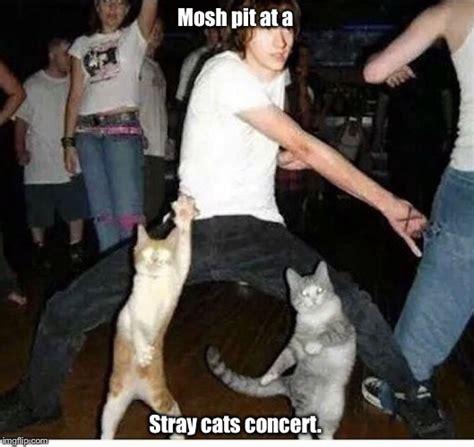 Dancing Cat Meme - cat dance imgflip