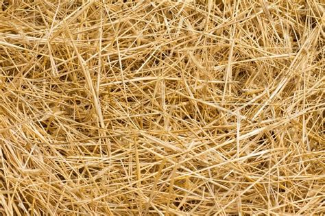 kleenex box background from ripe yellow hay after harvesting stock