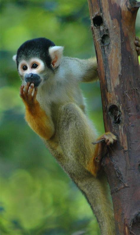 amazon rainforest monkeys    river cruise