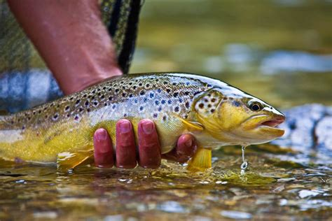 trout fishing slovenia drowning worms