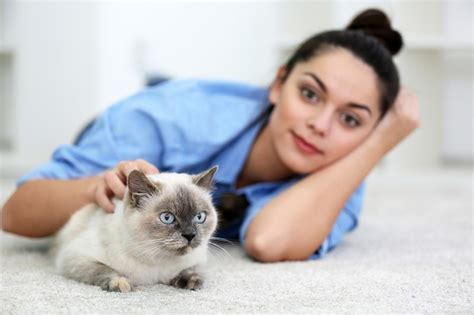 Remove Cat Urine Smell From by The Purrfect Way To Remove Cat Urine Odor From Carpet