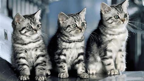 hintergrundbilder katzen kostenlos