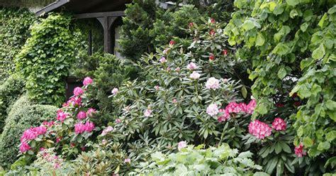 Immergrüne Pflanzen  Pflanzen, Pflege Und Tipps Mein