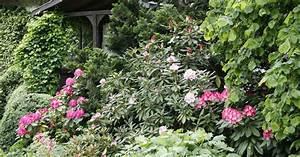 Pflanzen Immergrün Winterhart : gartenstraucher immergrun winterhart ~ Markanthonyermac.com Haus und Dekorationen