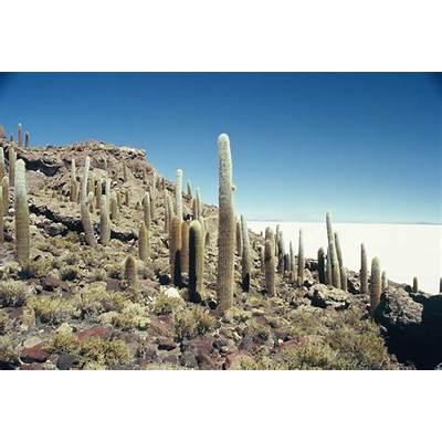Panoramio - Photo of Isla del Pescado Salar de Uyuni Bolivia