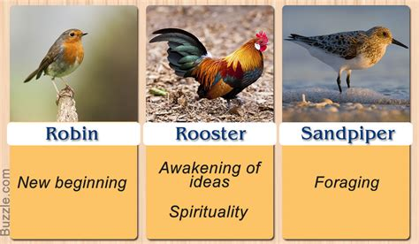 Bird Symbolism And Their Meanings