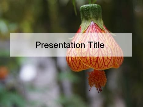 lantern flower powerpoint template