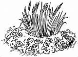 Flowerbed Coloring sketch template