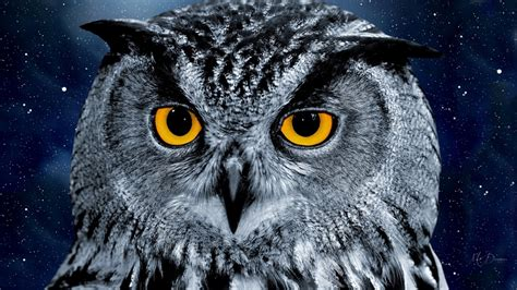 Owl Wallpapers by 20 Owl Wallpapers Backgrounds Images Freecreatives