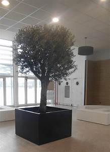 Gros Pot Pour Olivier : bac arbre indoor image 39 in jardini re cubique hall d 39 accueil du lyc e ~ Melissatoandfro.com Idées de Décoration