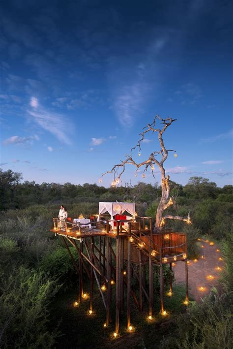 chalkley treehouse lion sands south africa bored panda