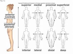 Directional Terms  U2013 Regan U0026 39 S Anatomy  U0026 Physiology Blog