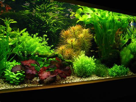 Planted Aquascape by How To Create Aquascape With Style Aquascaper