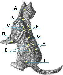 locate acupressure points   pet pets