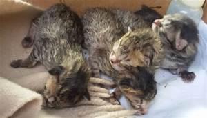 Task force per salvare 4 gattini abbandonati