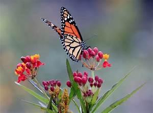 2015 Doyle Community Park Butterfly Garden – University ...