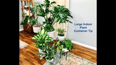 Large Indoor Plant Container Arrangement Tip
