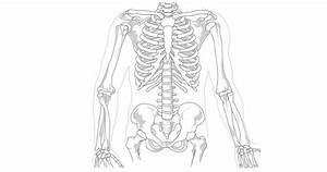 Spieren - menselijk lichaam