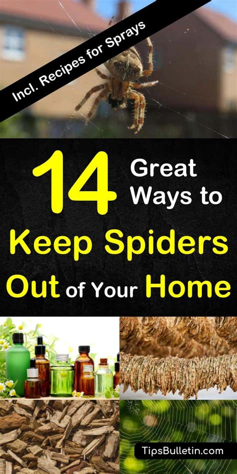 keep spiders out of house 14 great ways to keep spiders out of your home naturally 7624